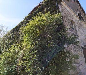 Le bâtiment envahi par la végétation